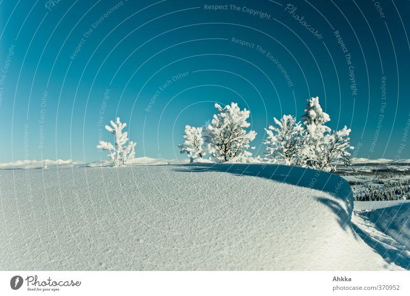 Kleine Bäumchen auf Schnee, Norwegen harmonisch ruhig Natur Landschaft Sonnenlicht Winter Baum Berge u. Gebirge Fjäll Unendlichkeit Stimmung Kraft Sicherheit