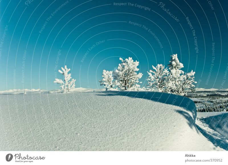Kleine Bäumchen auf Schnee, Norwegen Natur Baum Einsamkeit Landschaft ruhig Winter kalt Berge u. Gebirge Freiheit Horizont Stimmung Kraft Klima Zufriedenheit