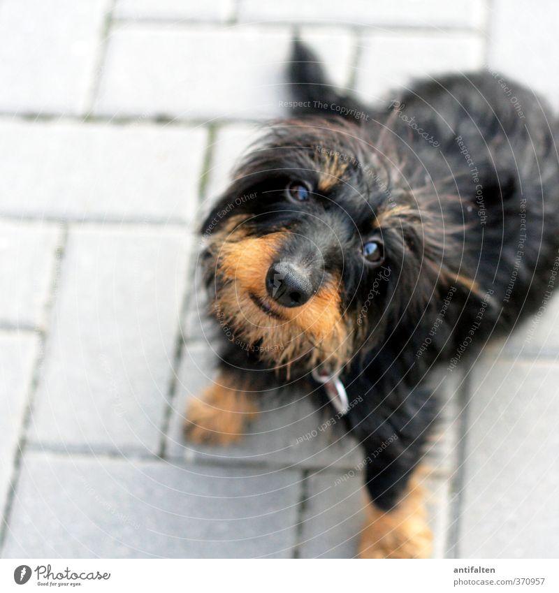 Nachbars Lumpi Hund Sommer Tier schwarz Auge Spielen grau Stein natürlich braun sitzen Platz Fröhlichkeit Nase Freundlichkeit Lebensfreude
