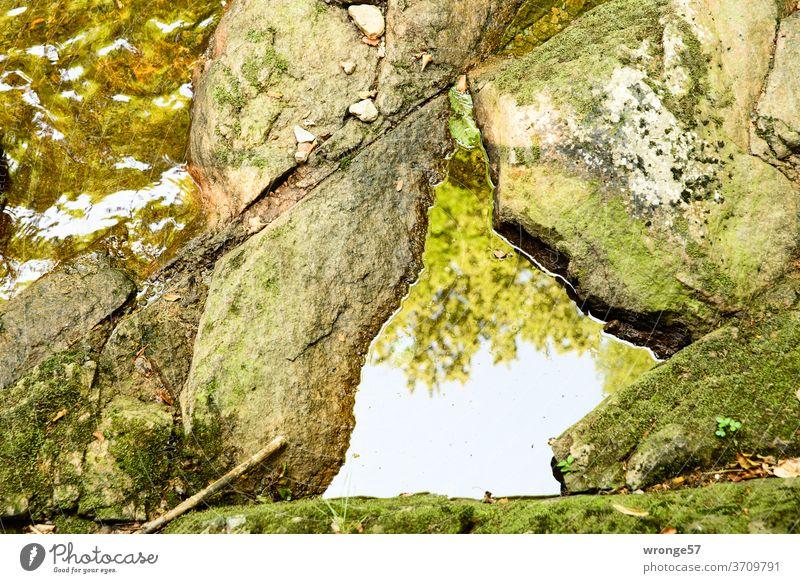 Mit grünem Moos bewachsene Steine liegen im Bett der Ilse, im Wasser spiegelt sich das Laub der langsam herbstlich färbenden Bäume Felsen grün bemoost Fluss
