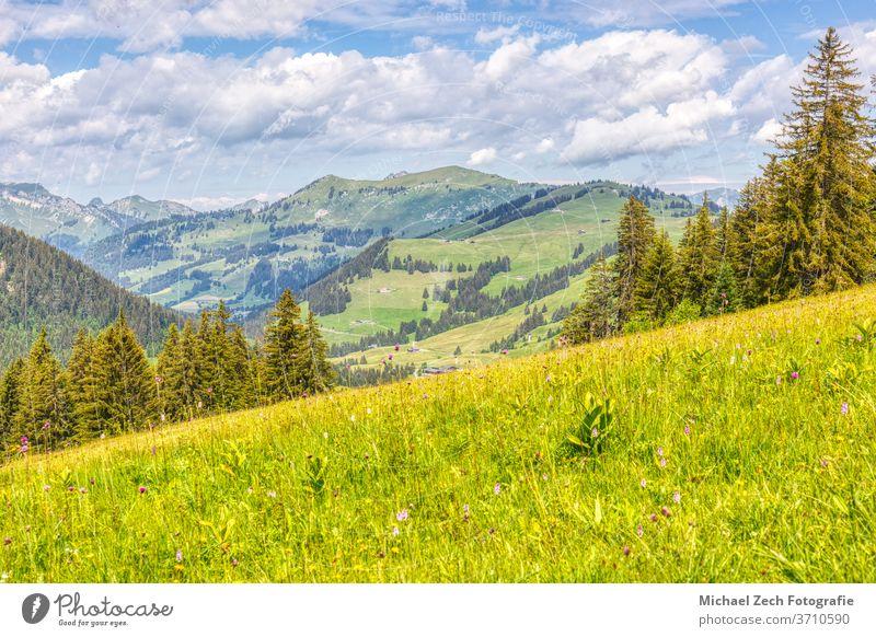wandern in der nähe von les mosses in den schweizer alpen Gras alpin Wildnis Tal Alpen Trekking Tourismus Waadt Wasser pic chaussy grün Natur im Freien Hügel
