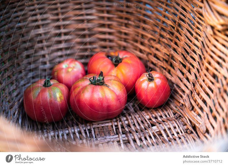 Korb mit frischen reifen Tomaten Ernte rot Gemüse natürlich organisch Lebensmittel Öko Garten Markt Lebensmittelgeschäft Weide Pflanze kultivieren Saison Sommer