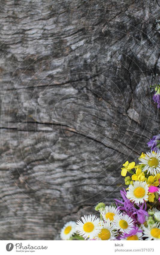 Pflanze | Sommerecke Natur schön Blume ruhig Frühling Blüte Glück Holz Feste & Feiern Dekoration & Verzierung Geburtstag Lebensfreude Blühend Hochzeit