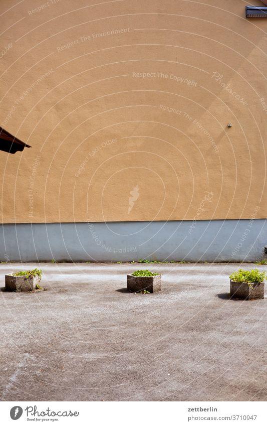 Grünanlage alt altstadt antik architektur fachwerk fachwerkhaus geschichte historie mittelalter museal museum nordrhein-westfalen soest straße pflanze kübel