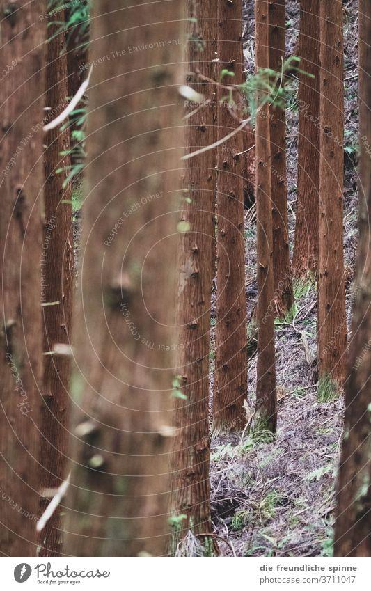 Blick in den Wald III Stamm Baumstamm Nadelbaum Laubbaum Dürre mystisch magisch Gothic trocken ast grün wald Ast Pflanze Menschenleer Umwelt Tag Natur
