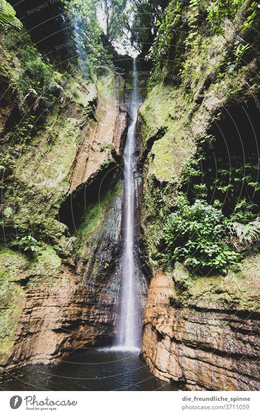 Wasserfall auf den Azoren Berge Natur Wassertropfen Außenaufnahme Berge u. Gebirge Umwelt Felsen Landschaft Menschenleer Bach Fluss grün Tag Schlucht Stein