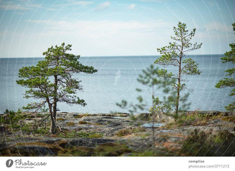 Österbotten Finnland Meer Küste Strand Felsenküste felsen Kiefer weite Skandinavien Ostsee ostseeküste Pietarsaari Horizont