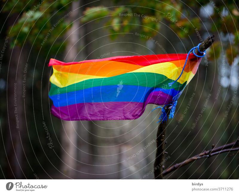 Regenbogenfahne weht im Wind. Zentralperspektive Regenbogenfarben Homosexualität Symbolik Schwule Lesben Transgender Freiheit Symbole & Metaphern Gleichstellung