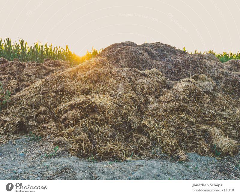 Misthaufen am Rande eines Feldes Abendsonne Bauernhof Kot Landwirtschaft Maisfeld Wiederverwendung ackerbau bio draußen öko Außenaufnahme Natur Umwelt ländlich