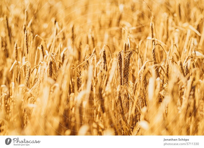 Getreidefeld im Sommer Ernte Feld Gluten Landwirtschaft Weite ackerbau anbau bio draußen gerste glutenhaltig roggen vegan vegetarisch weizen ökologisch Ackerbau