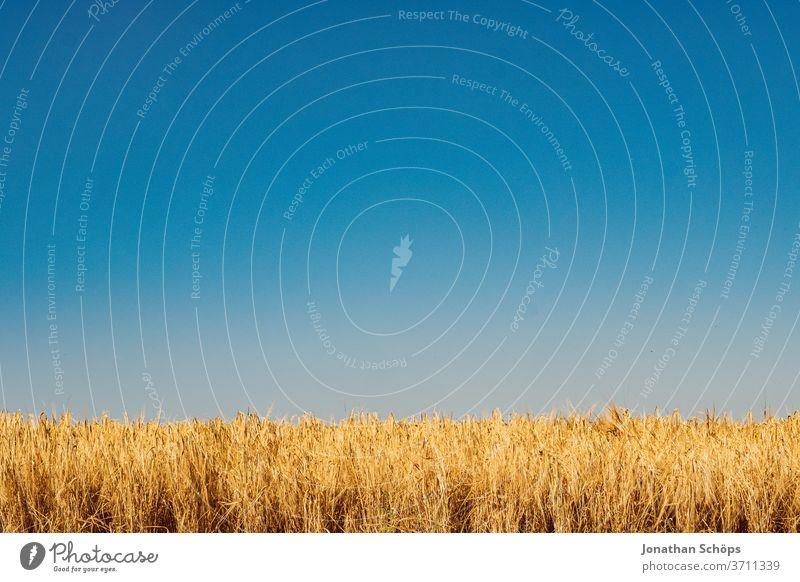 Getreidefeld im Sommer Ernte Feld Gluten Himmel Landwirtschaft Weite ackerbau anbau bio blauer Himmel draußen gerste glutenhaltig roggen sonnig vegan