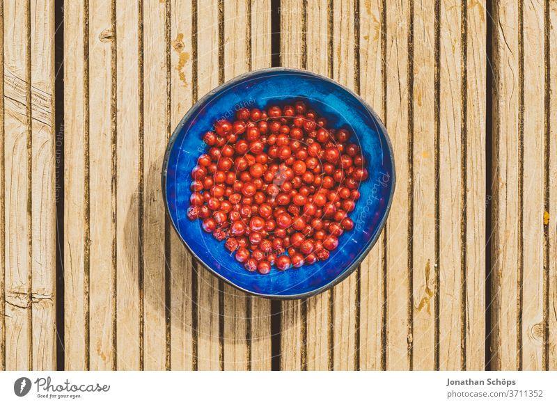 rote Johannesbeeren in blauer Schüssel auf Holz Beere Beeren Essen Frucht Früchte Johannisbeere Johannisbeeren Nahaufnahme Nahrung Obst draußen farbenfroh
