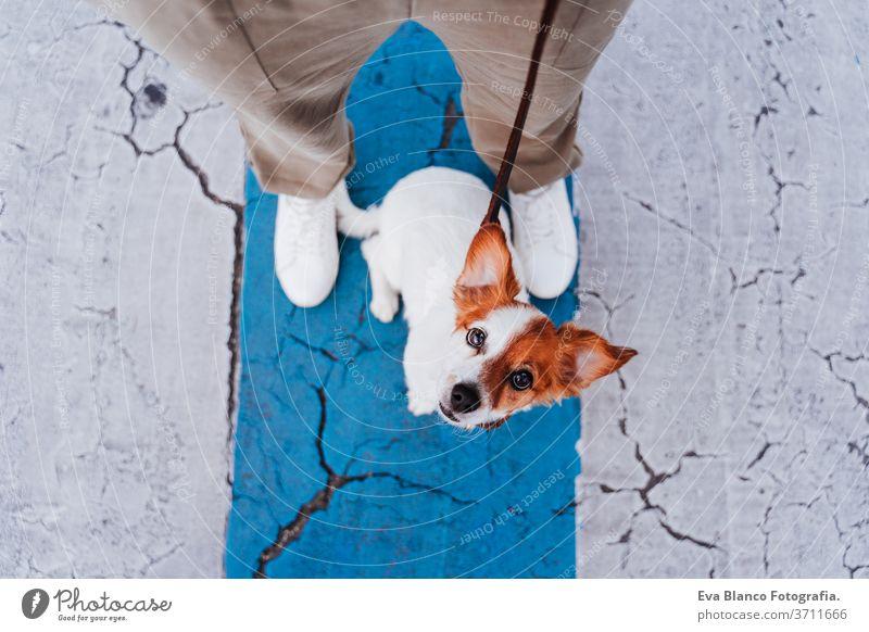 Draufsicht einer Frau auf einem Fußgängerüberweg mit einem süßen Jack-Russell-Hund daneben. Neues normales Konzept Straße Schutzmaske neue Normale jack russell