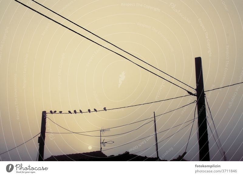 Vögel auf Stromleitung im Nebel und Dämmerlicht stromkabeln Strommast Kabelnetz Laternenpfahl Morgenlicht Mast Morgenstimmung Elektrizität Abendstimmung