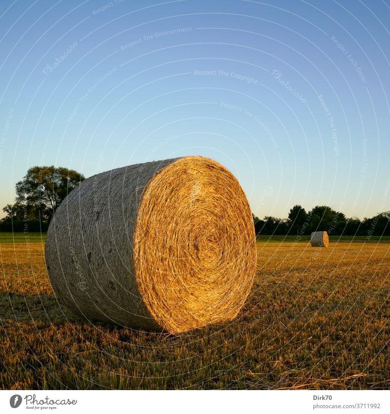 Herbstlich: Heuballen auf der gemähten Wiese Stroh Strohballen Ernte Mahd mähen abgemäht Feld Landwirtschaft Himmel Natur Landschaft wolkenlos
