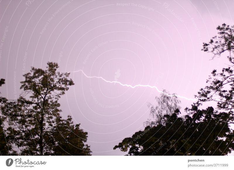 Ein Blitz am rosa Himmel zwischen zwei Bäumen. Gewitter, unwetter gewitter elektrische ladung Leuchtbogen natur naturphänomen Licht Ladung Rosa himmel