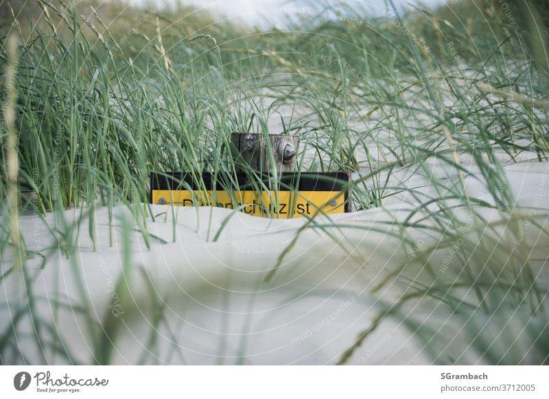 Schild im Deichsand Strand Stranddüne Sand Küste Düne Gras Ferien & Urlaub & Reisen Nordsee Dünengras Deichschutz Menschenleer Außenaufnahme Natur Farbfoto
