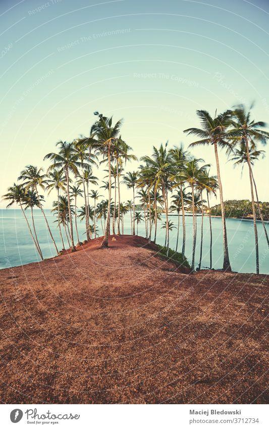 Kokosnusspalmen bei Sonnenuntergang, Sommerferienkonzept. Handfläche Natur MEER tropisch Strand Urlaub Feiertag Himmel gefiltert Einfluss Landschaft reisen Meer