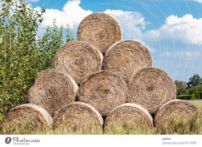 rollenbild. alle 10! Rolle Heu Gras Natur Außenaufnahme Farbfoto Wiese Feld Landschaft Landwirtschaft Menschenleer Ernte Ackerbau Futter ländlich Stroh Ballen