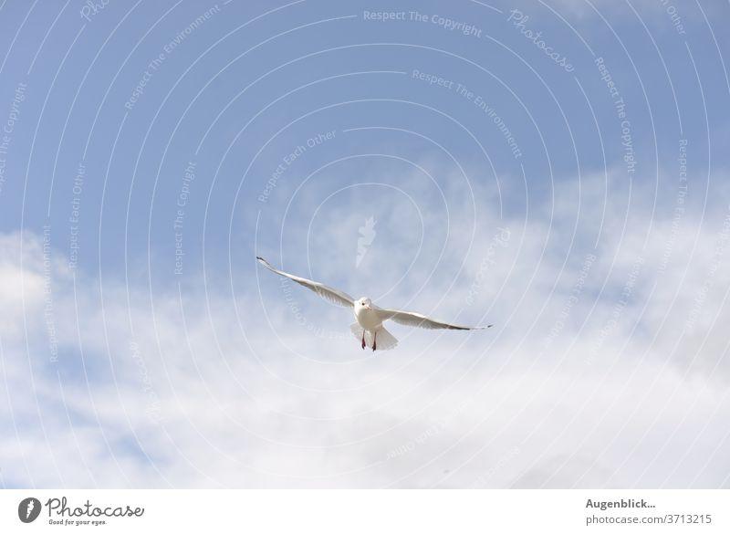 eine fliegende Möwe Himmel blau Meer Freiheit Flügel Strand Wasser Weiß Feder Küste Ferien & Urlaub & Reisen Ostsee