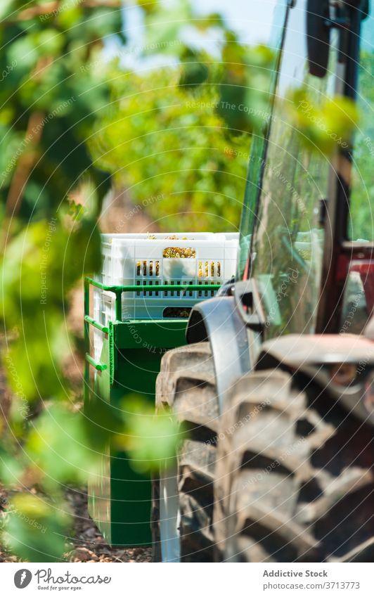 Traktor auf dem Bauernhof im Sommer Garten Traube Weinberg Saison Ernte geparkt grün Verkehr Ackerbau schäbig ländlich Natur sonnig tagsüber Pflanze Wachstum