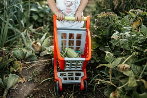Kind mit Wagen beim Gemüsepflücken im Garten Kindheit Bioprodukte Biologische Landwirtschaft Vegetarische Ernährung Veggie frisch Frische Gesundheit