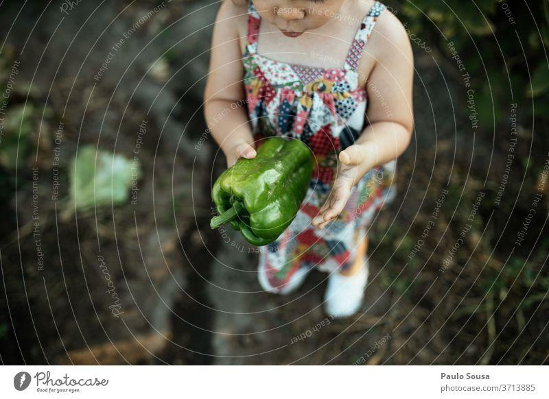 Kind hält grünen Pfeffer Paprika grüner Pfeffer Bioprodukte organisch Biologische Landwirtschaft frisch Frische Gemüse Farbfoto Lebensmittel