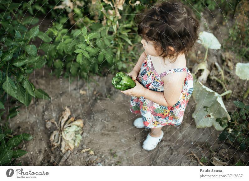 Kind hält grünen Pfeffer Kindheit Gemüse Veggie Paprika grüner Pfeffer Bioprodukte Gesundheit Farbfoto Lebensmittel Ernährung frisch Nahaufnahme lecker