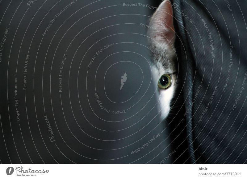 auf der Lauer... Katze Katzenauge Katzenkopf Auge lauernd Angriff angriffslustig Tier Haustier Hauskatze Tierporträt Tiergesicht Blick Neugier beobachten Sofa