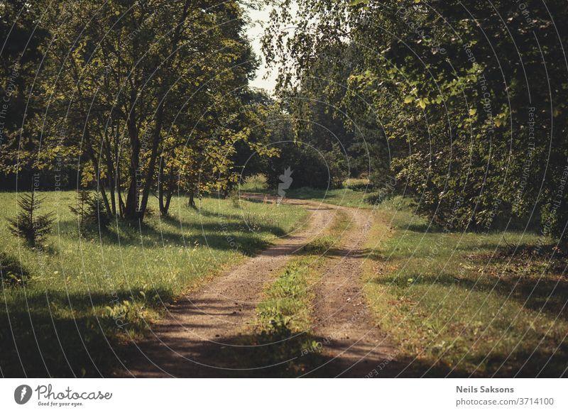einsame kurvenreiche Landstraße mit Bäumen auf beiden Seiten an einem sonnigen Morgen Straße Wald Natur Baum Weg Herbst Landschaft grün Park Gras Frühling
