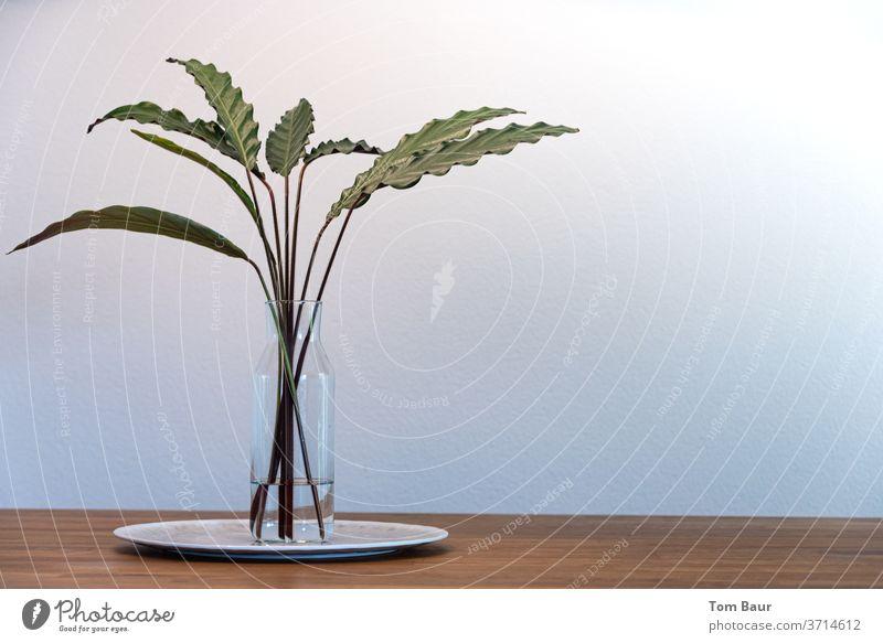 Grüne Blätter in Vase auf Holztisch - Calathea crocata Grünpflanze Tisch Pflanzenteile Tischdekoration Eiche Stillleben Ambiente Lifestyle Farbfoto