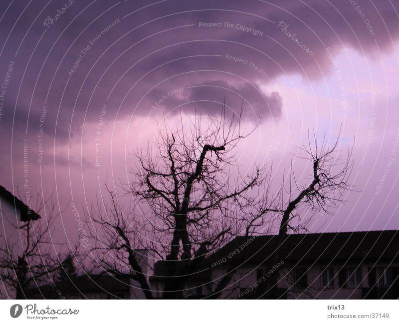 violetter himmel Himmel weiß Baum schwarz Wolken Wetter Dach Ast schlechtes Wetter