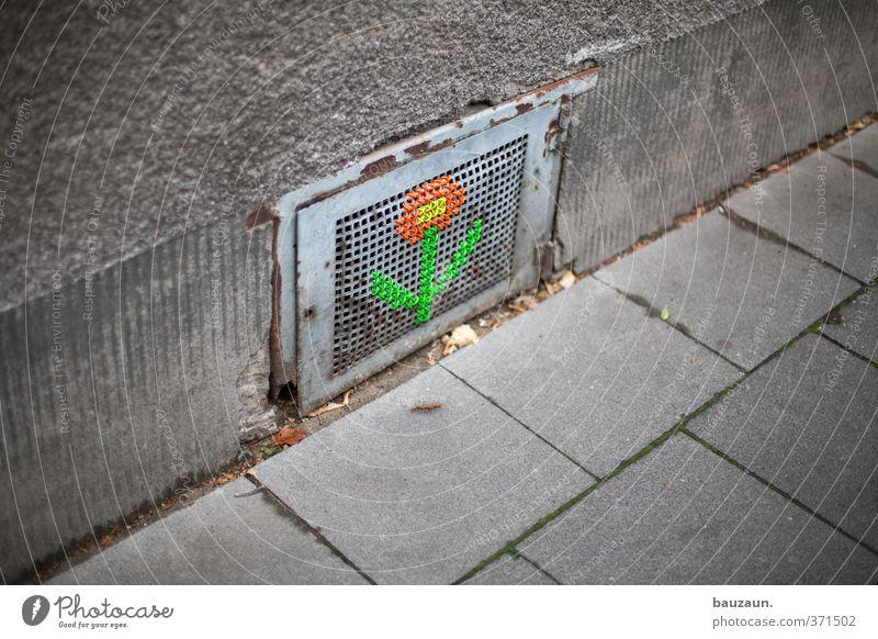 ut köln | ehrenfeld II | kellerblume. Stadt grün schön rot Blume Haus gelb Wand Wege & Pfade Mauer Gebäude grau Stein Metall Linie Fassade