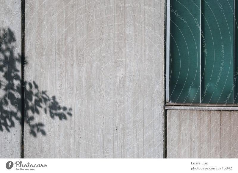 graue Fassade mit türkisgrünem Fenster, dazu der anmutige Schatten eines Baumes Sichtbeton trist Haus Außenaufnahme Gebäude Menschenleer Bauwerk Farbfoto