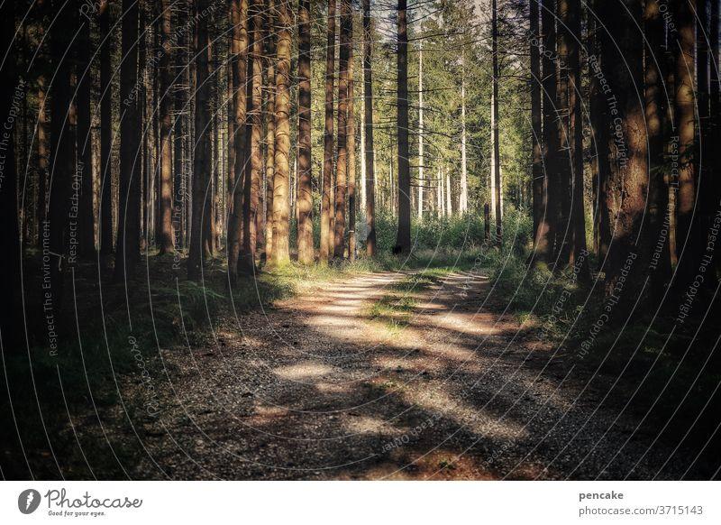 naherholung Wald Pfad Sonnenlicht Schatten Erholung zuhause Urlaub wandern Abendstimmung Sonnenuntergang Bäume Spaziergang Umwelt Menschenleer Wege & Pfade