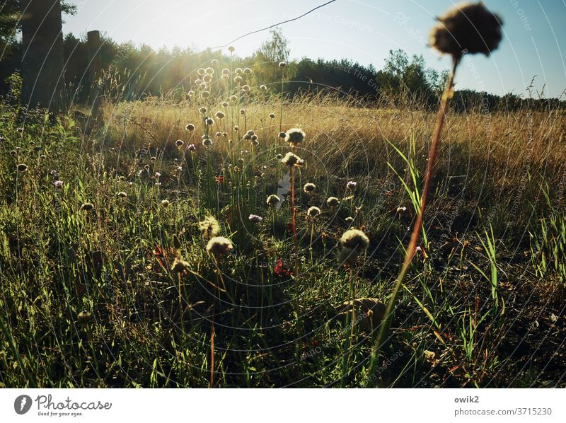 Feldrand Wiese Menschenleer Pflanze Farbfoto Tag Sommer Außenaufnahme Natur Umwelt natürlich Schwache Tiefenschärfe Schönes Wetter Sonnenlicht blühen Idylle