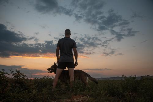 Mann, der mit seinem Hund trainiert Training Menschen Gras männlich Himmel Haustier Glück Spaß Sonnenuntergang im Freien Natur Wiese Männer Sommer Tier