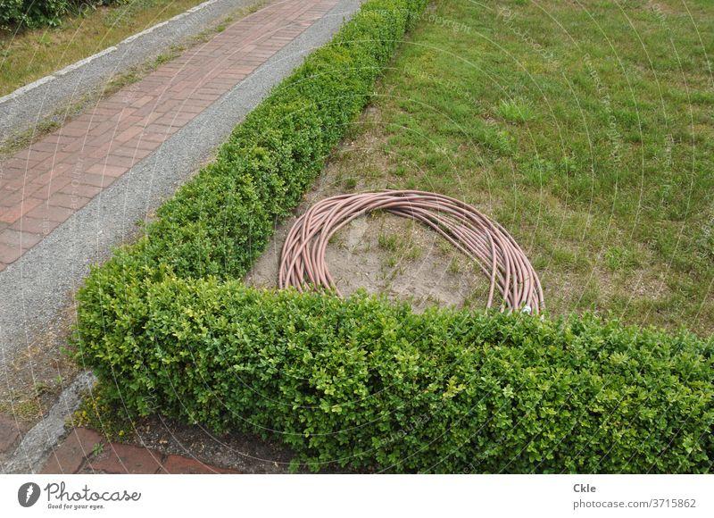 Schlauch in Heckenlandschaft mit Gehwegen Gartenschlauch Park Grün Gartenwege gießen Gartenarbeit Farbfoto Pflanze Wasserschlauch Fliesen Grünanlage Dürre
