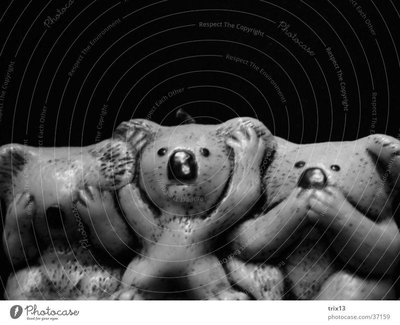 nicht sehen, hören und sprechen! schwarz Tier sprechen Nase Kerze Dinge hören Blick Australien