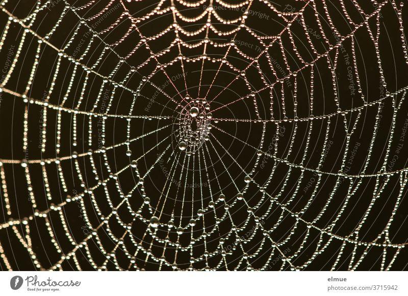 ein Klassiker in schwarz - Perlen reinen Wassers haben sich am frühen Morgen im Spinnennetz verfangen Netzwerk Wassertropfen Kontrast Faden Spinnenfaden Frühtau