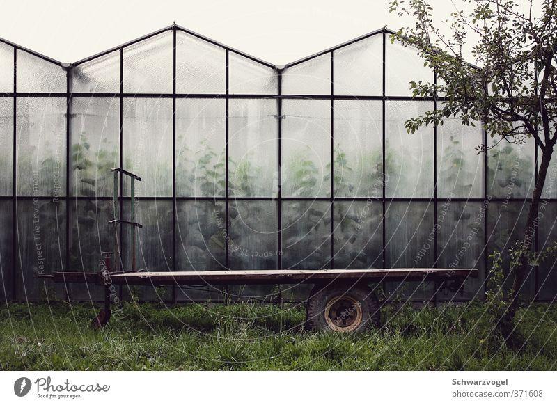 Stillstand / Wachstum Lebensmittel Gemüse Ernährung Landwirtschaft Forstwirtschaft Umwelt Natur Pflanze Grünpflanze Nutzpflanze Bauwerk Gebäude Gewächshaus