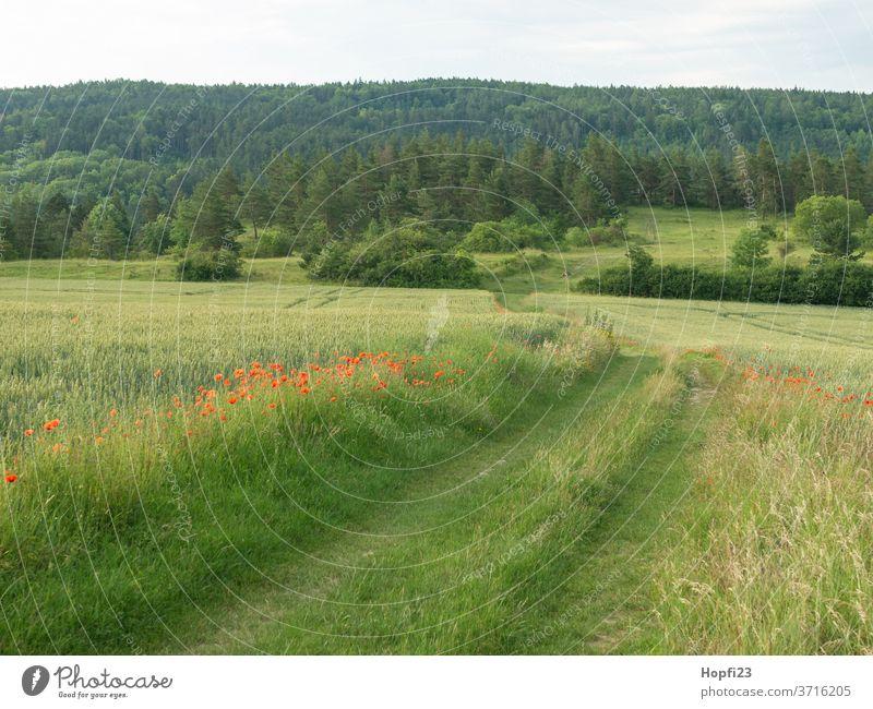 Mohnblumen streifen am Feld Mohnblüte Mohnfeld Weizen Weizenfeld Himmel Wolken Wolkendecke rot grün Ackerland bestellt mohnblumen Sommer Natur Pflanze