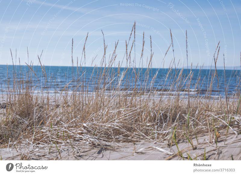 Dünengras am Meer ,( Firth of clyde ) bei Ayr in Schottland Sand Himmel Außenaufnahme Ferien & Urlaub & Reisen Natur Menschenleer Landschaft Tag Farbfoto
