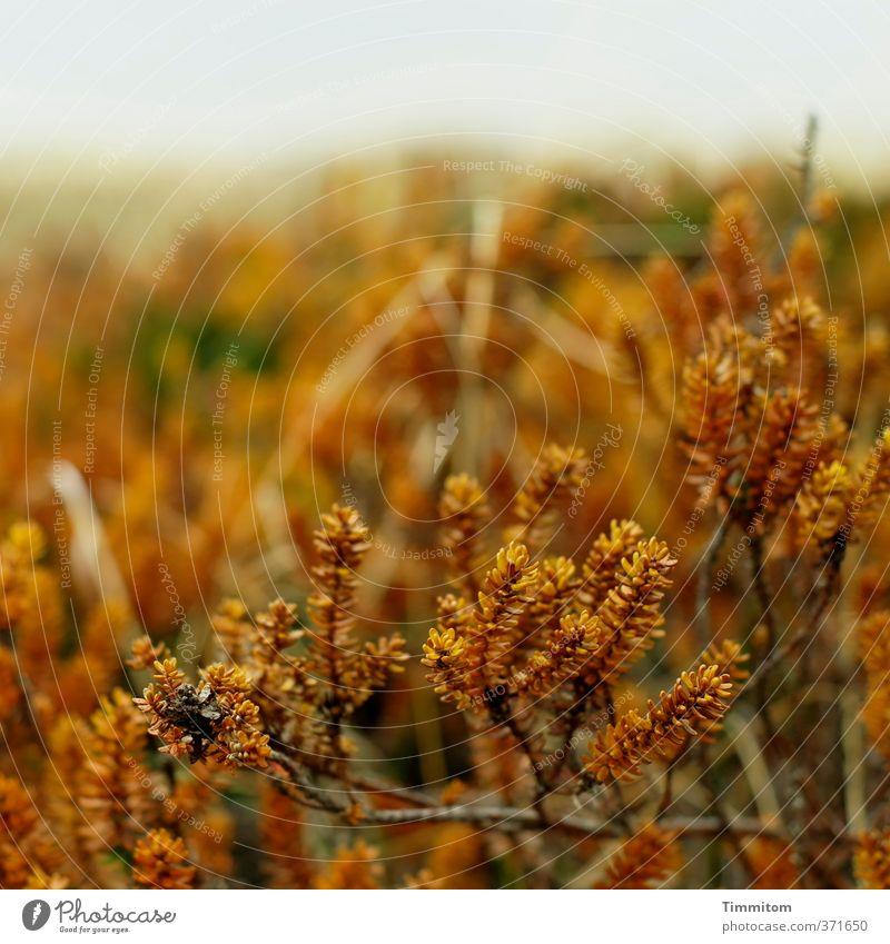 Pflanze | Biozahnbürste, vulg. Natur Pflanze Landschaft Umwelt natürlich braun Sträucher Wachstum einfach Dänemark