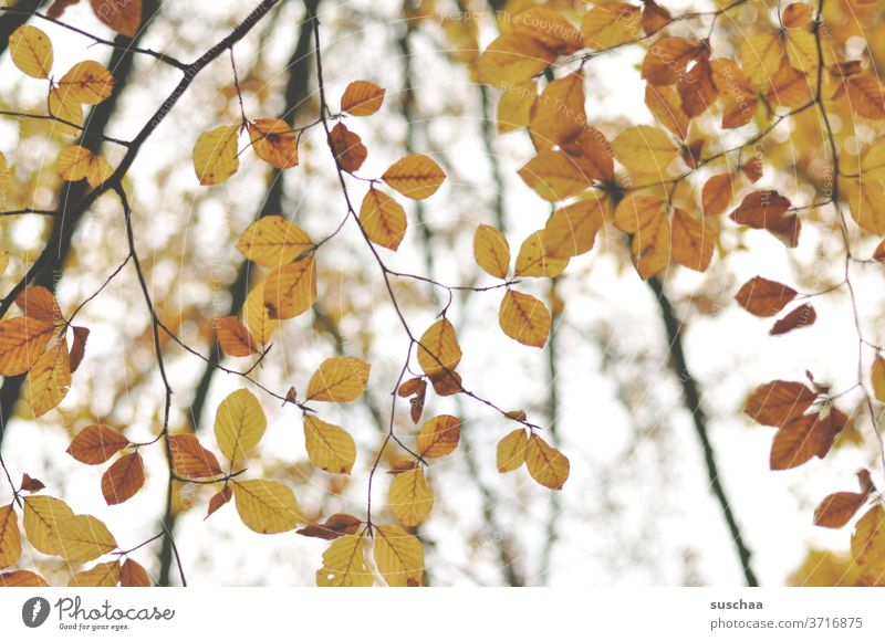 herbstliche blätter Herbst Jahreszeit Melancholie Äste Blätter Laub Herbstlaub Natur Baum Herbstfärbung Zweige u. Äste Herbstbeginn Vergänglichkeit Veränderung
