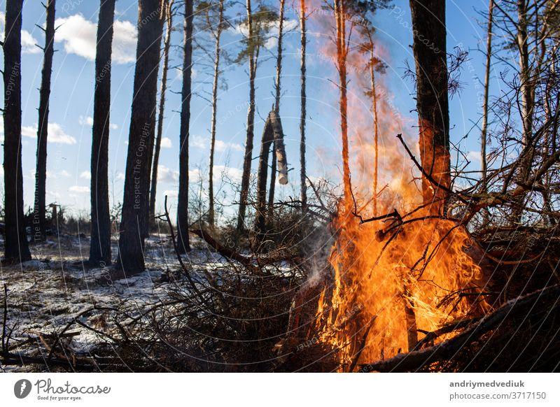 Brennendes Feuer. Das Lagerfeuer brennt im Wald. Textur des brennenden Feuers. Das Lagerfeuer zum Kochen im Wald. Verbrennen von trockenen Zweigen. Touristenfeuer im Wald. Textur von brennenden Zweigen