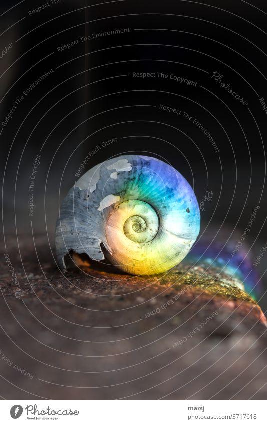 Bunt kann auch altes und bleiches zum Strahlen bringen Schneckenhaus Spirale drehen einfach außergewöhnlich einzigartig trashig mehrfarbig Überraschung träumen