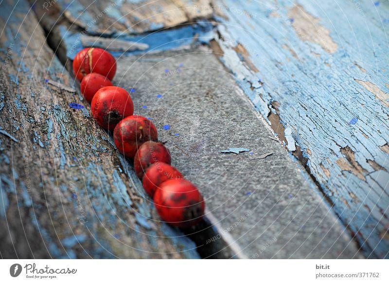 in der Rille alt blau rot Herbst Wege & Pfade Holz Linie Dekoration & Verzierung Kreativität kaputt Zusammenhalt verfallen mediterran Konzentration Partnerschaft Sammlung
