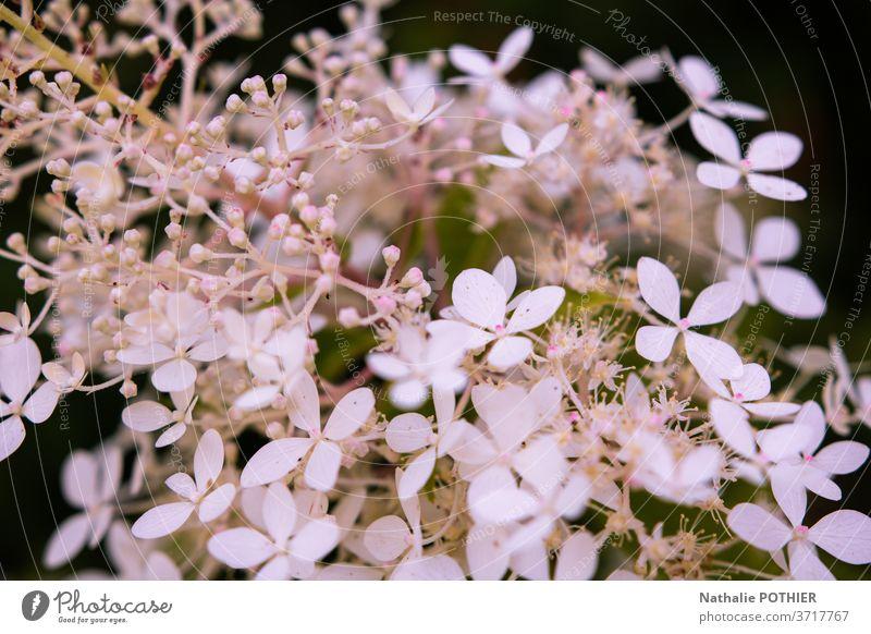Hübsche weiße Blumen in Nahaufnahme im Garten hübsch Unschärfe Schatten Blütenblatt Blütenblätter Bokeh Blätter Frühling Hintergründe Einfachheit Reinheit