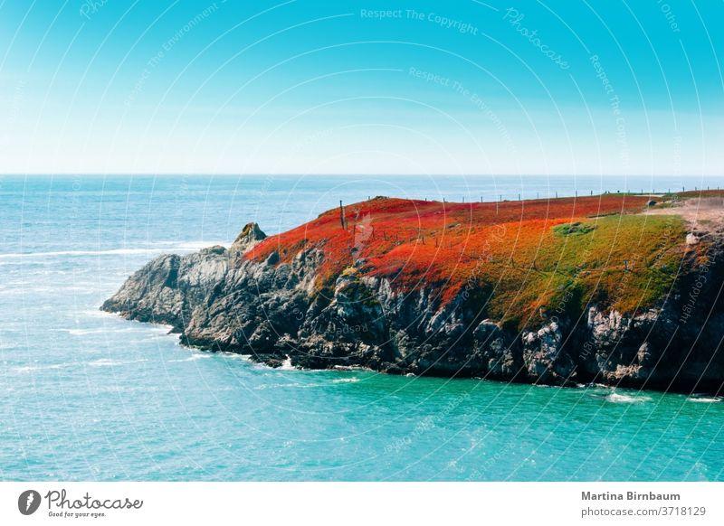 Feuerrote Vegetation auf einem Felsen am Pazifischen Ozean, Kalifornien Felsbrocken Landschaft reisen Uferlinie Strand Meer blau Stein Wasser Pazifik Natur